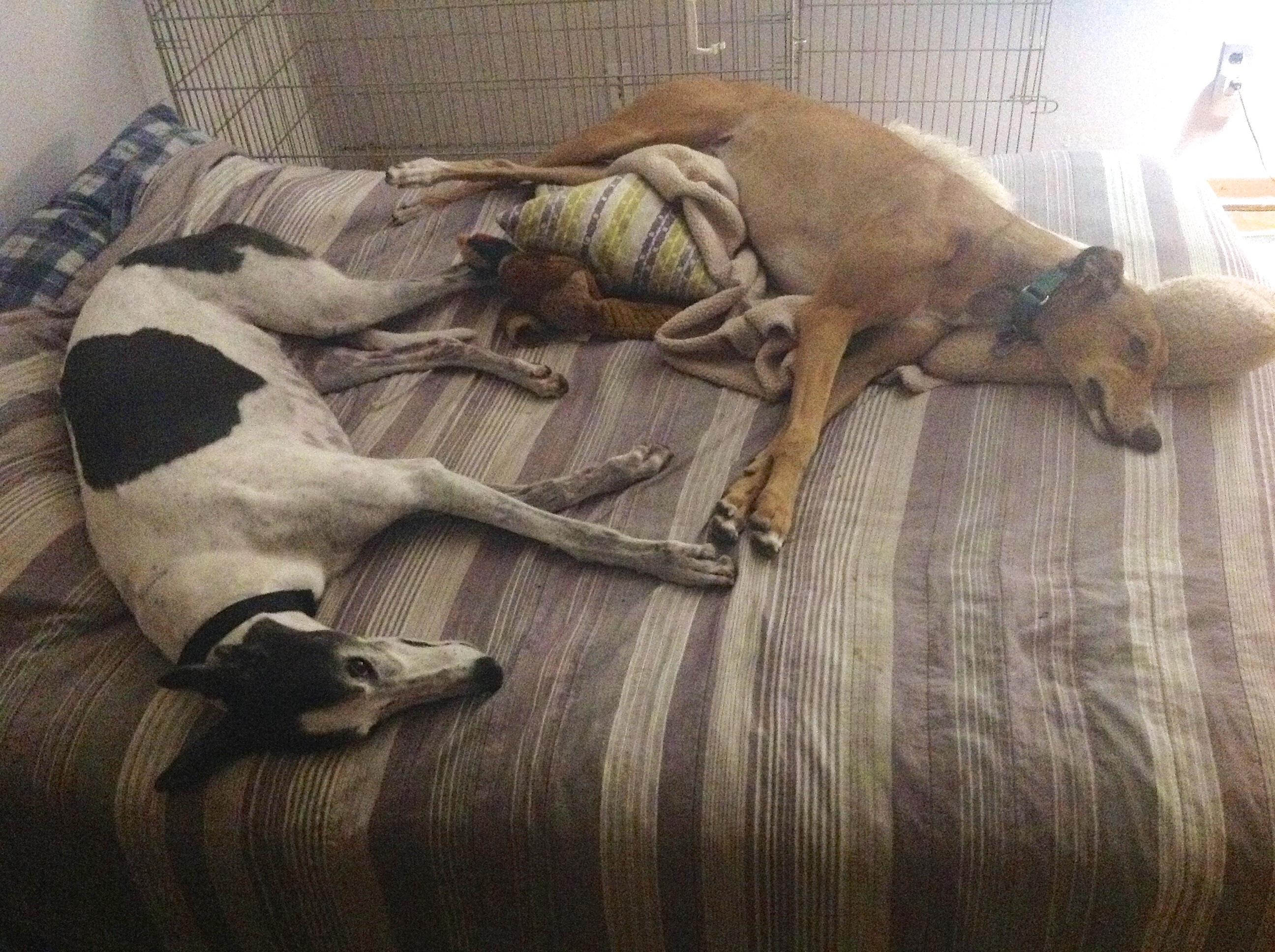 Dog Bed Hogs